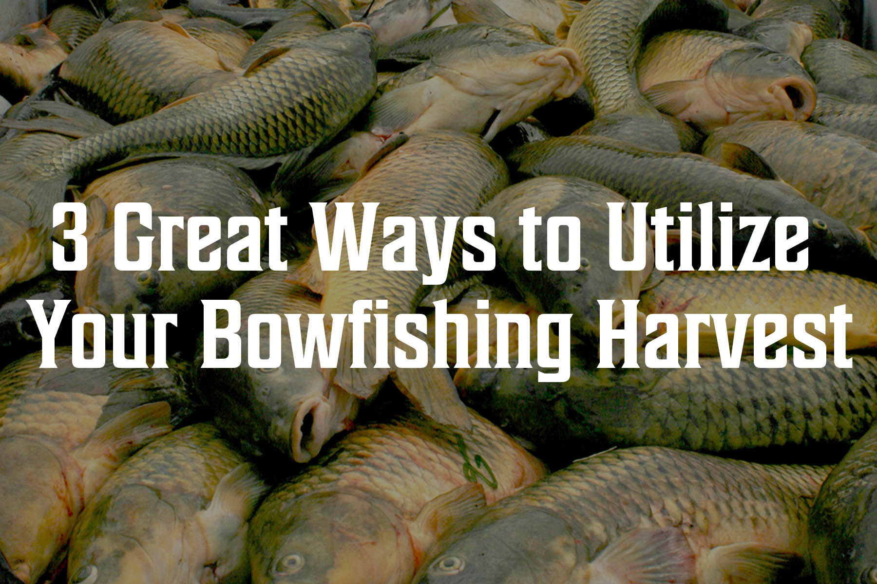 3 Great Ways to Utilize Your Bowfishing Harvest